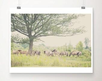 horse photograph animal photography horse print equine photograph equestrian print horse art pony photograph pony print rustic decor