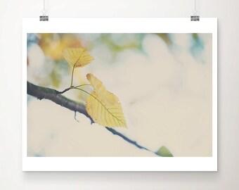 yellow leaf photograph fall photograph tree photograph nature photography autumn photograph fall print yellow leaf print