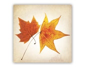 Botanical Art, Leaf Art, Minimalist Photography, Organic Art, Fall Leaves, Still Life, Square Art, Square Print, 8x8, 10x10, 12x12