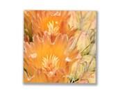 Orange Cactus Flower, Floral Art, Nature Photography, Floral Home Decor, Flower Wall Art, Cactus Wall Decor, Square Print, Square Art