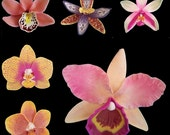 Polymer Clay Orchids  tutorials ebook
