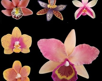 Polymer Clay Orchids  tutorials ebook