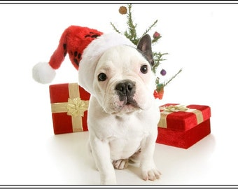 4 Bulldog Dog Dogs Christmas Santa Claus Stationery Greeting Notecards/ Envelopes Set