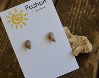 Seashell Jewelry …Brown Shell Stud Earrings (1041)