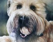 Custom Pet Portrait, CMQ Studio, Art, Oil Painting, Animal Painting, Pet Portrait, Portrait Commission, Animal Portrait, 11x14
