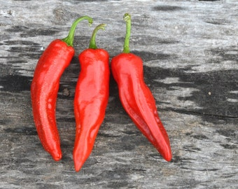 Heirloom Pepper Seeds, Georgia Flame Peppers, Hot Red Peppers, Great for Container Gardens and Salsa Gardens
