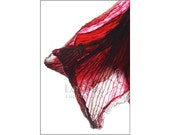 Enchanting Veil, Flower Photography, Mysterious, Garnet Ruby Red, Exotic Home Decor