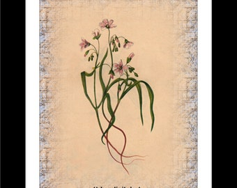 Vintage Wildflower-Downloadable Vintage  Art Print