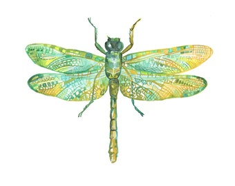 Dragonfly Art Print - Illustration - Watercolor Insect
