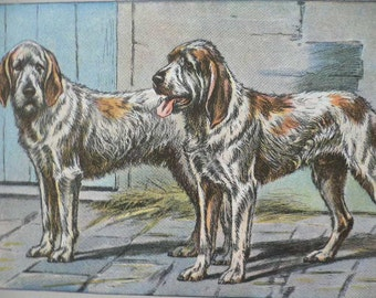 ANTIQUE 1907 Griffon Vendeen hound French dog signed dog print Chromolithograph P Mahler German artist Collectors item Rare Birthday gift
