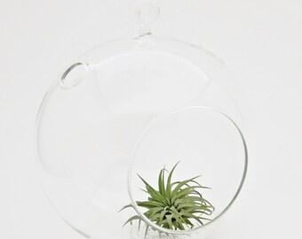"""6"""" Round Glass Terrarium"""