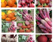 Heirloom Beet Seeds Collection Non GMO