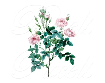 ROSES Instant Download, Redoute Digital Downloads, Redoute pink roses wedding clipart 215