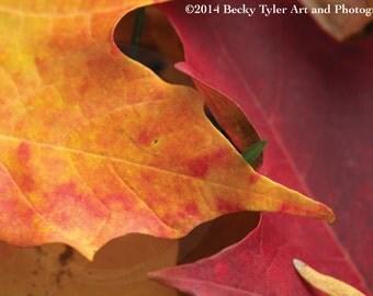 Autumn Leaves, Macro Photography, Fine Art Photo Print