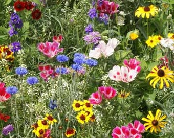 Wildflower Seeds, Bird and Butterfly Wildflower Seed Mix, Bulk, Annual and Perennial Mix, 100 Seeds
