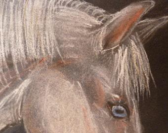 White Horse Face Eye Drawing by Laura Hundsdorfer Original Drawing Pastel Charcoal