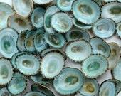 Aqua Limpet Shells 2 DOZEN Per Order!