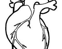 Human Heart X-Stitch Anatomical Line Art Simple Cross Stitch Pattern PDF