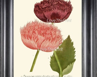 BOTANICAL PRINT  Art Print W45 Beautiful Peony Pink CoralBurgundy Large Antique Flowers to Frame Wall Home Living Room Bedroom Decor