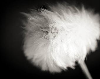 Dandelion Photography - Black and White Decor - Modern Wall Art