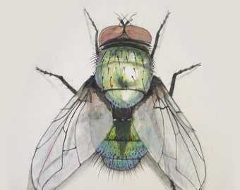 Giclee Print of a Housefly Painting