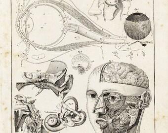 Antique  Original Humant anatomy Print - Human Bones- Human Heads Mouth- Eyes- 1843
