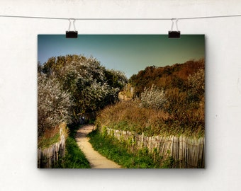 Belgium Beach Photo, Landscape Photography, Blue Bicycle, Path