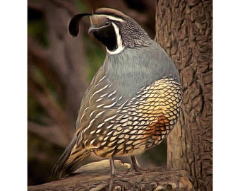 California Quail Photo Imagery Print on Luster Finish Paper Unframed