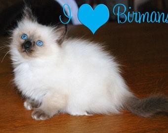 I love Birman Cats Fridge Magnet 7cm by 4.5cm,