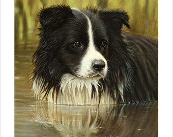 Border Collie Portrait, Water Baby.  Limited Edition Print. Personally signed and numbered by Award Winning Artist JOHN SILVER. jsfa077