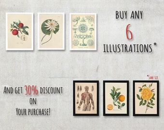 When You buy six illustrations, then this will be handy. Or 30% discount on Your purchase. - FREE SHIPPING WORLDWIDE
