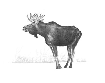 Set of 10 Christmas cards of a hand drawn Moose, printed on recycled paper with red envelopes