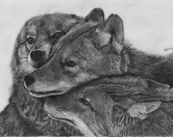 Wolf pack - Wolves canvas print