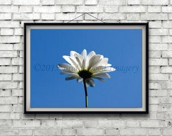 White Daisy Print, White Flower Photography, White Floral Picture, Nature Color Photograph, Daisy Print, White & Blue Floral Print
