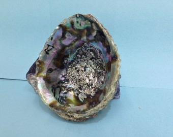 """ABALONE SHELL LARGE  4""""- 5"""" natural shell dish"""