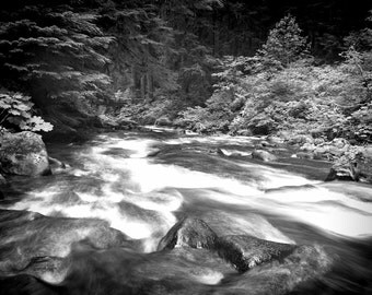 Photo Poster Print of Wild Forks Washington Forest River