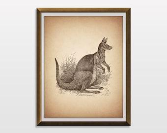 PRINTABLE ART, Kangaroo Print, Kangaroo Art, Kangaroo Poster, Antique, Vintage, Historic, Natural, Kangaroo Illustration, Nursery Wall Art