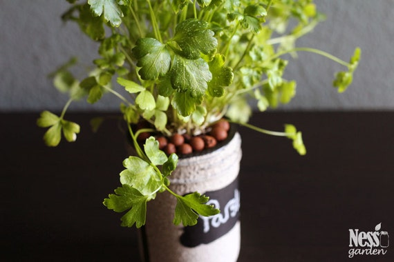 hydroponic indoor herb garden parsley diy hydroponic by nessgarden. Black Bedroom Furniture Sets. Home Design Ideas