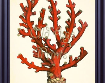 Antique RED CORAL Print Ellis Vintage 8x10 Art Print Plate 38 Nautical Marine Life Sea Creature Ocean Beach House Coastal Wall Decor OL0806