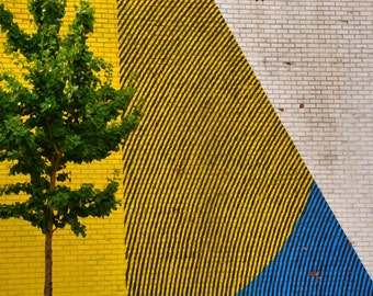 Tree in NYC with Painted Mural, Urban Landscape, Colorful