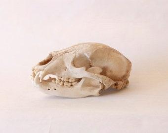 FOR HIM: vintage animal skull bones home decor collectible old