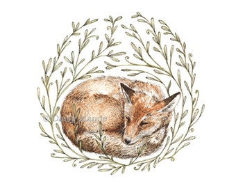 Little Sleeping Fox - Nature Watercolour Pen Ink Illustration Fine Art Print, Animal Art - 8x10""
