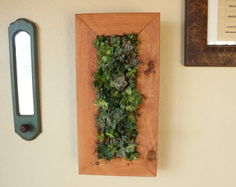 DIY Vertical Hanging Succulent Living Wall. Awesome Project!