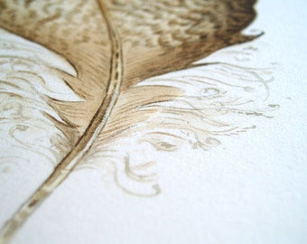 8x10 Watercolour Duck Feather Painting- Illustration Print