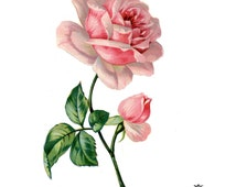 Victorian Pink rose Book illustration, Wintage, floral tattoo, Body Art, Wickedly Lovely Skin Art Temporary Tattoo