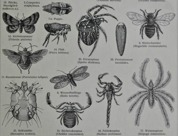 Arthropods engraving invertebrate morphology zoology print old - Ilustraciones infantiles antiguas ...