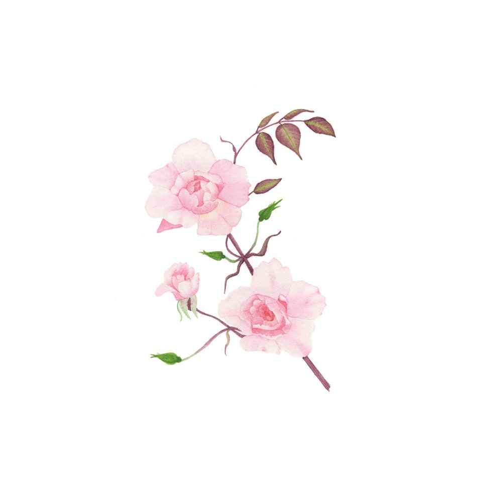 Rose roses aquarelle peinture originale illustration - Jardin fleuri meaning colombes ...