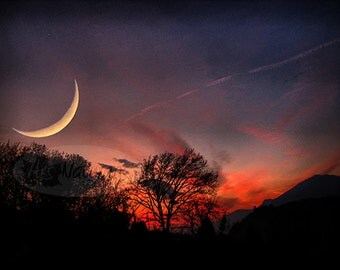 Crescent Moon Twilight Trees High Quality Photo Print