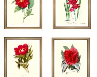 "Botanical prints Red. Red flowers print Set. Botanical Print Set. ANY 4 red flower prints. Red Flower print set. 5x7"" 8x10"" 11x14"""
