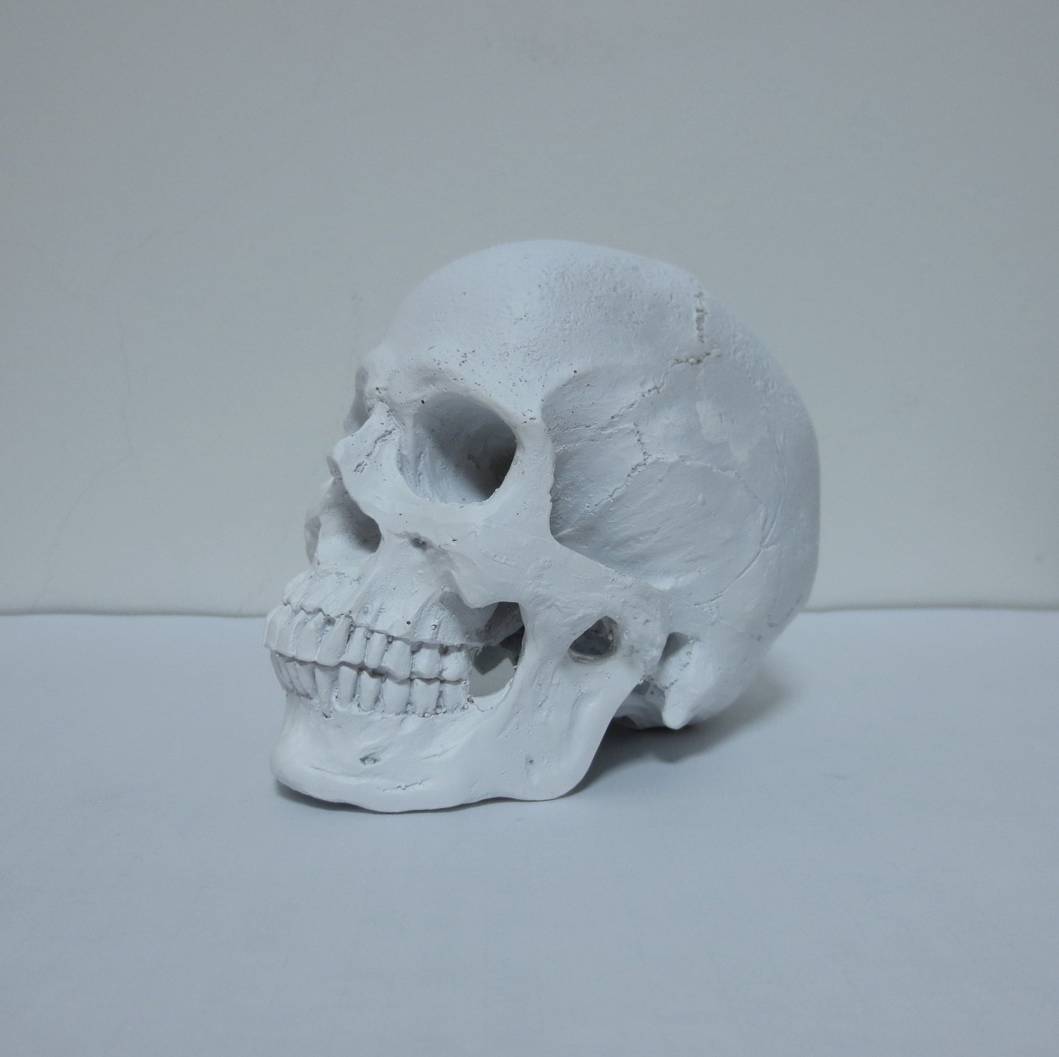 white human skull faux human skull home decor by